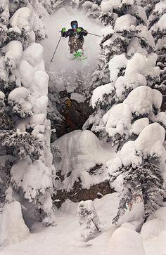 Shoot through the trees - Ski