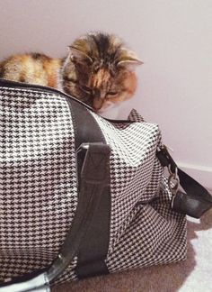 Shelly the Cat in a Citta Design Bag Travel Essentials, Cat Lady, Bobs, France, Places, Red, Leather, Beauty, Design