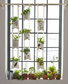 herbs ladder ikea blog botanical herbs pinterest. Black Bedroom Furniture Sets. Home Design Ideas