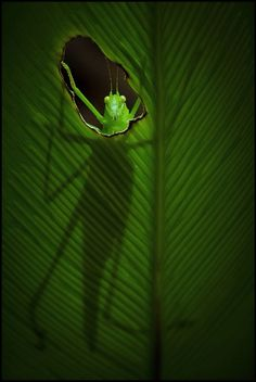 Photo The Katydid Redux by Steve Passlow on 500px