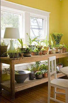 Indoor plant table - a great way to get some serious oxygen flowing in the home!