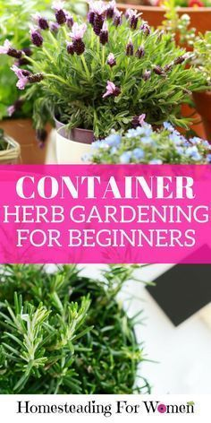 Cool Container herb gardening for beginners | 10 day herb gardening for beginners e-course FREE. #gardeningforbeginners #containergardeningforbeginners
