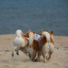 this one is not only cute but i find it interesting how this portrays an action of the dogs instead of being still.
