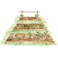 Organic Gardening Advice: Our Complete Garden Know-How Series - Organic Gardening - Mother Earth Living