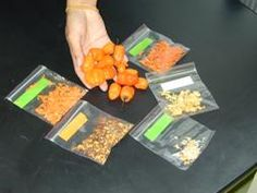 Solvent Extraction and Composition Analysis of Capsaicin from Different Parts of Habanero Peppers