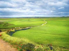 Run, walk, or bike, I will adventure the Camino de Santiago.