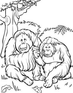 Zoo Coloring Pages: Here are the best 19 printable coloring pages of zoo for preschoolers to enjoy coloring.
