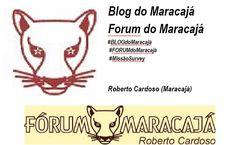 Bureau de Informações: Newsletter MARACAJÁ  n7