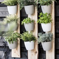 Five Ideas For Your Vertical Herb Garden – Handy Garden Wizard