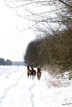 Noorderplassengebied, Almere, Flevoland.