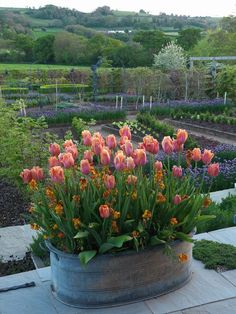 Cool Container Plants, Container Gardening, Gardening Tips, Parc Floral, Tulip Bulbs, Spring Bulbs, Garden Planters, Gravel Garden, Dream Garden