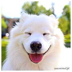 Existe um mundo que só quer te ver sorrir 😊🐶 #wecanimal #eyes #dogs_of_pinterest #pet #pets #animal #animals #dogsitting #photooftheday #dogoftheday #lovedogs #lovepuppies #hound #adorable #doglover