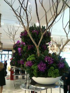 'Amazing spring flower display' at David Jones, Sydney