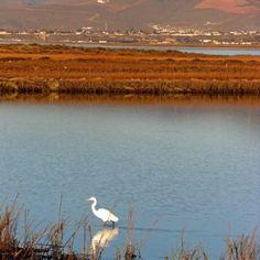 Punta Banda Estuary, Ensenada Baja California, Mexico~Located near our vacation home. So beautiful & peaceful!!