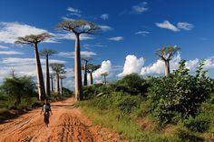 Madagascar on Fotopedia
