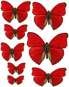 Foros / Imágenes y Gráficos / Mariposas - Swirlydoos Monthly Scrapbook Kit del Club