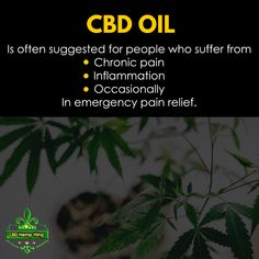 CBD OIL: Is often suggested for people who suffer from chronic pain, inflammation and occasionally in emergency pain relief. Chronic Pain, Pain Relief, Hemp, King, People, People Illustration, Folk