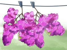 Best practice to plant a lilac bush
