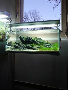Favourites: 1200L tank by Oleg Foht Great new job by this ...