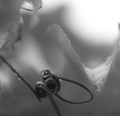 A black and white, Wide aperture image of the passion fruit creeper. A bit of an arty shot, but really feeling it. Passionfruit Vine, Wildlife Photography, Art Photography, Durban South Africa, Wide Aperture, Family Photos, Couple Photos, Creeper, Corporate Events