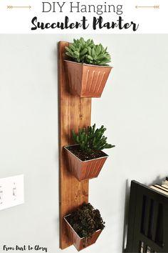 DIY: Hanging Succule