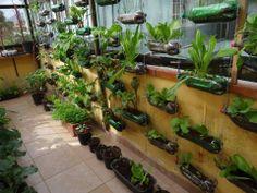 Pet para fazer um jardim suspenso