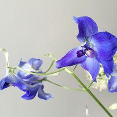 Flowers | Peet likes
