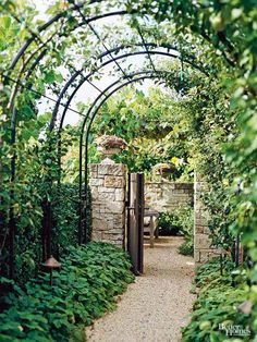 A tunnel arbor is a great way to lead to a magnificent garden beyond. The extended structure adds drama to your yard, creating a sense of anticipation for what lies beyond. Here, the landscape is connected via lush green plantings reaching both high and low. The arched iron arbor provides beauty and grace and can even withstand harsh weather. #gardenvinesbackyards