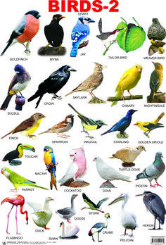 birds with names - Google Search