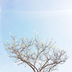 spring is back :) #obidos #oeste #portugal #p3top #oestealive #gerador