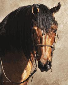 Barry Hart - Sunshine - Horse Print - Canvas Options