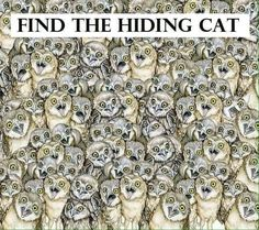 Can you find hidden cat in this pic? There is a cat hiding between these owls. Can you spot the cat? On first instance, it may look a little difficult to spot it, but when you Hidden Images, Hidden Words, Hidden Pictures, Word Pictures, Best Funny Pictures, Crazy Cat Lady, Crazy Cats, Ache O Gato, Reto Mental
