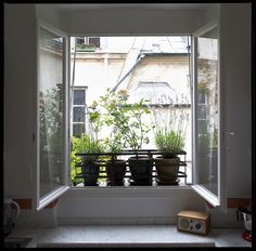 Le vert à soi, décoration végétale de fenêtre