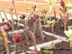 tutorial: grow your own shrubs and trees