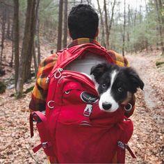 Heartwarming Photos Highlight Adventurous Bond Between Pups and Humans - My Modern Met