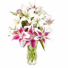 Show her she will be Eternally Beautiful to you! This gorgeous selection consists of six White and Stargazer Lilies accented with delicate Waxflower. Also included are a quality message card floral preservative and flower care information. Your flowers come elegantly wrapped in a decorative sleeve and are hand packed in an attractive gift box.