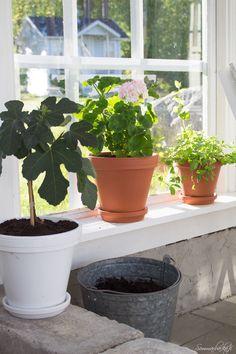 Sommarbacka Open Window, Sun Room, Conservatory, My Photos, Planter Pots, Patio, Sea, Garden, Flowers