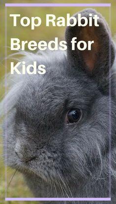 Top Rabbit Breeds for Kids - PBS Pet Travel - Lindsey Quillen - Pet Fashion Best Pets For Kids, Best Small Pets, Cool Pets, Best Rabbits For Pets, Show Rabbits, Pet Bunny Rabbits, Pet Rabbit, Dwarf Rabbit, Rabbit Breeds
