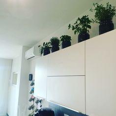Erbe aromatiche in casa
