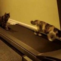 Sparky and Jet are two kitties that understand the importance of exercise. Check out their different methods of testing out this moving treadmill. While one kitty likes to keep its …