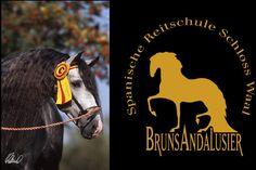 Bruns Andalusier - Spanische Reitschule