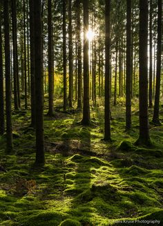 Photo Swedish forrest by Hans Kruse on Landscape Edging Stone, Nature Landscape, Abstract Landscape, Landscape Paintings, Acrylic Paintings, Forest Photography, Landscape Photography Tips, Beautiful Forest, Beautiful Places