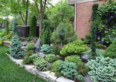 garden shrubs by post Evergreen Landscape, Evergreen Garden, Dwarf Evergreen Shrubs, Garden Shrubs, Shade Garden, Garden Bed, Winter Plants, Mediterranean Garden, Garden Pictures