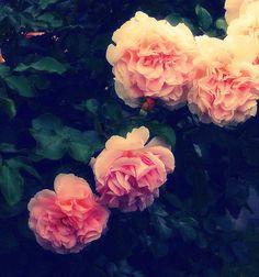 I love #roses