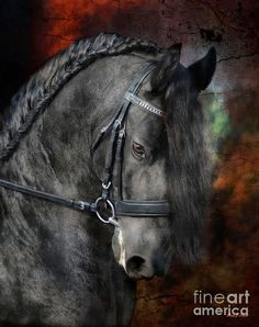 Horses Photograph - Rembrandt by Fran J Scott Horses And Dogs, Cute Horses, Pretty Horses, Animals And Pets, Horse Riding Quotes, Most Beautiful Horses, Friesian Horse, Appaloosa, Majestic Horse