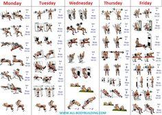 Precise Bodybuilder Workout Chart Bodybuilding Schedule Chart Bodybuilding Chart For Beginners Bodybuilder Workout Chart Bodybuilding Workout Schedule Chart 4 Day Workout, Gym Workout Chart, Workout Plan For Men, Gym Workouts For Men, Gym Workout For Beginners, Weight Training Workouts, Gym Workout Tips, Workout Plans, Fitness Workouts