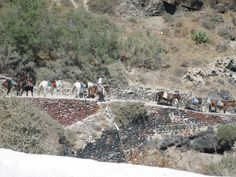 Donkeys down the cliff