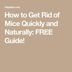 How to Get Rid of Mice Quickly and Naturally: FREE Guide!