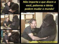 Mural Animal: Koko a Gorila Que Fala por Sinais Fica Triste Morte Ator.