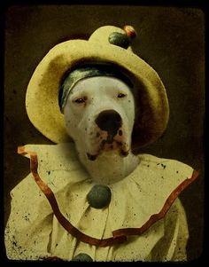 Dog as a pierrot.
